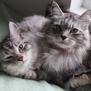 Bästa kattleksaken är lillebror.