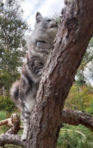 Katt med GPS i träd
