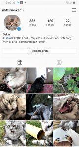 Katten Oskar på instagram