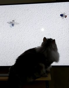 Katten Oskar ser på film för katter