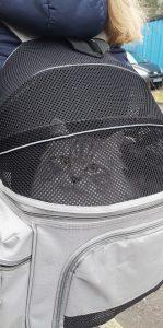 Transportväska katt
