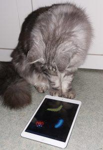 Katt leker med Ipad