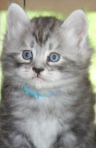Oskar kattunge