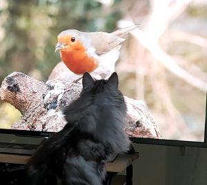 Katt tittar på film för katter
