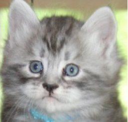 Oskar som kattunge köptes på blocket