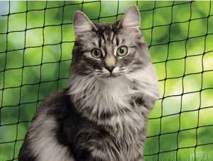 skaffa kattunge - skaffa balkongnät