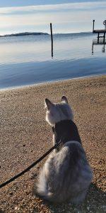grå kattunge på strand