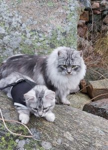 gråa katter utomhus